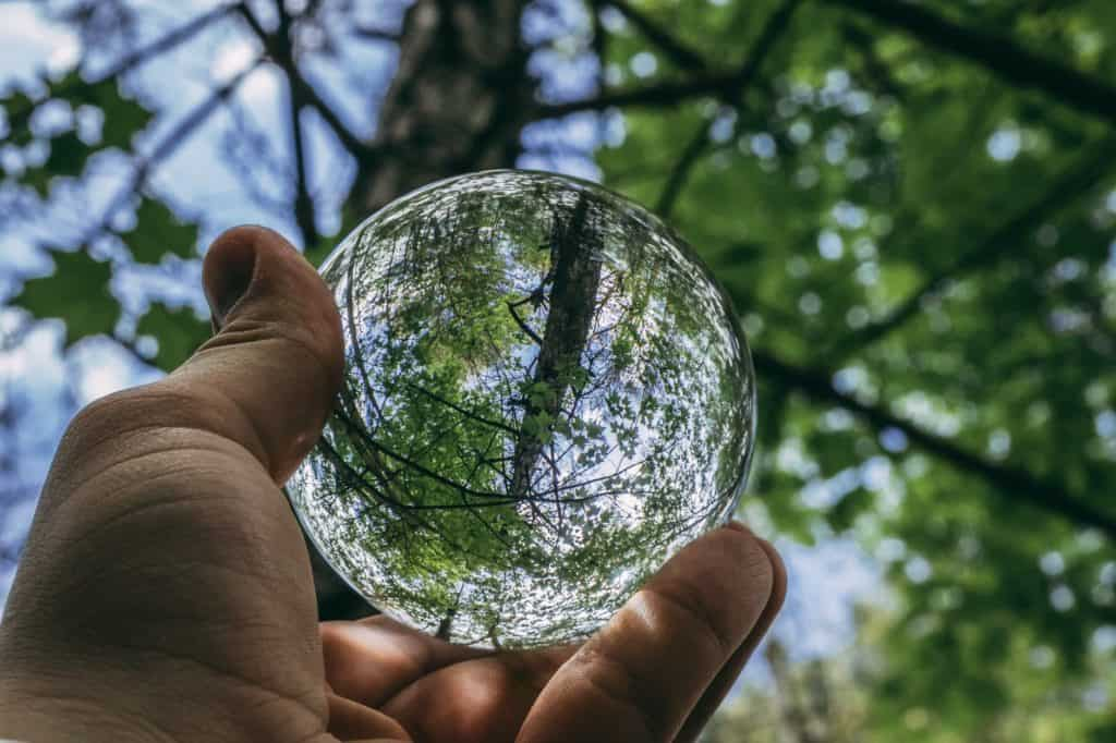 What Is Ecology And How Does It Work?