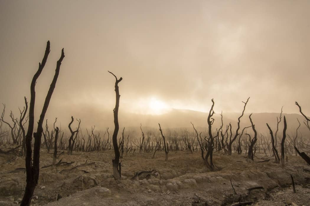 Effects Of Climate Change: What Damages It Had Done