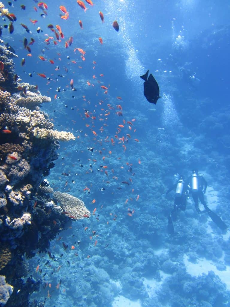 Ocean Acidification On Coral Reefs: Global Warming's Evil Twin