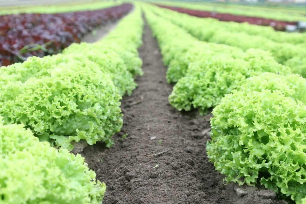 Knowing Genetic Engineering In Foods and Its Effect