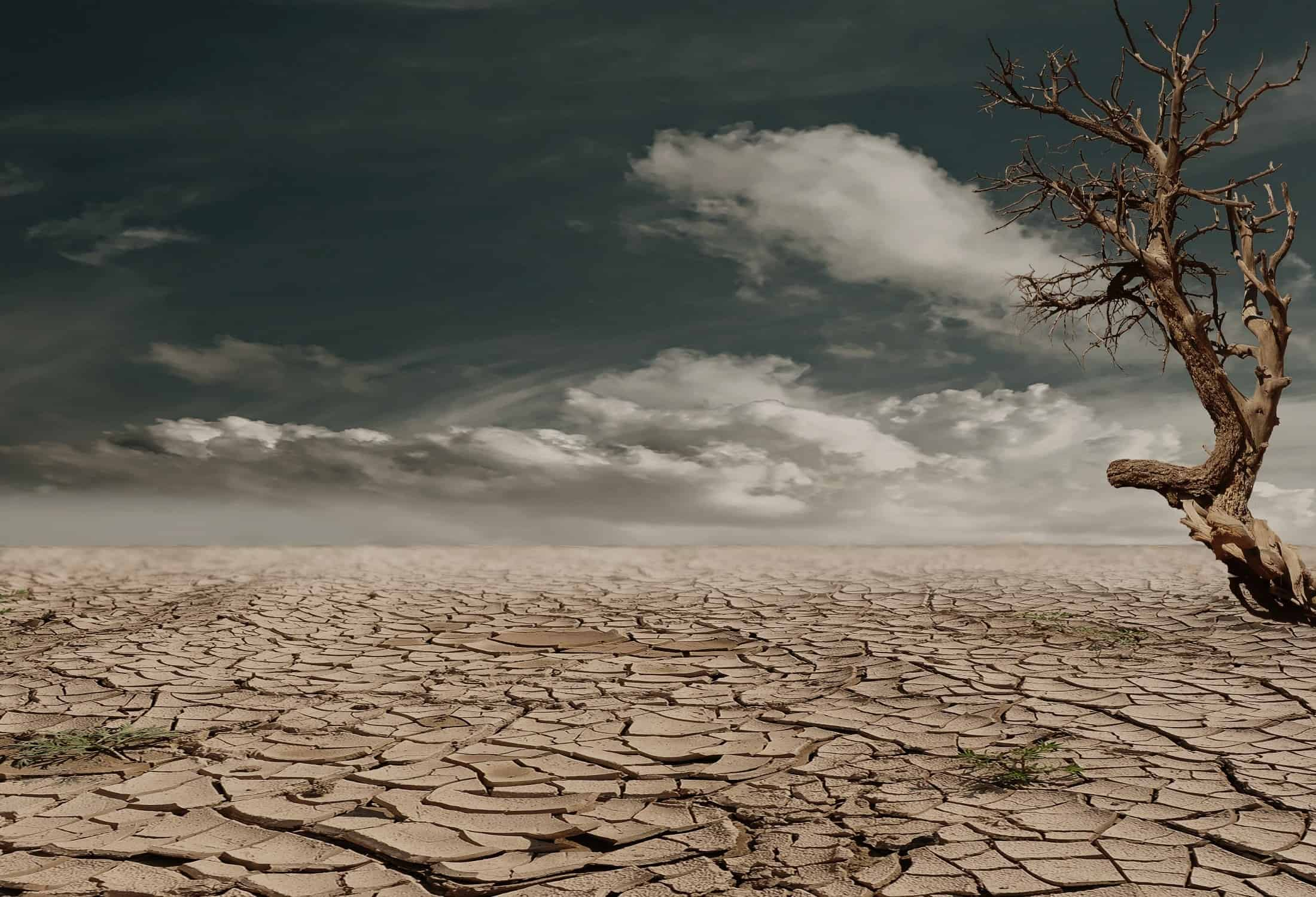 Some Must-Know Facts About Climate Change Effects